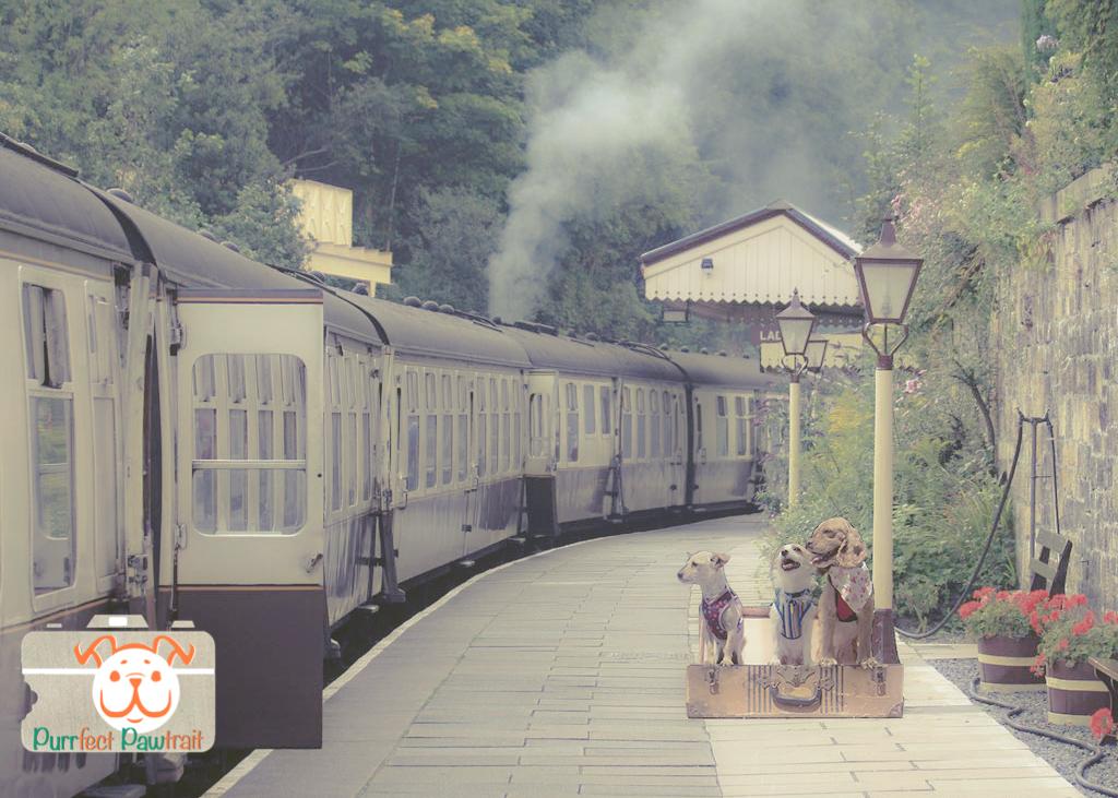 trainLFM